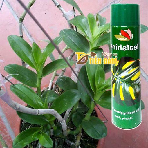 Thuốc xịt bóng lá giữ ẩm lá cho cây văn phòng Leafshine - T50