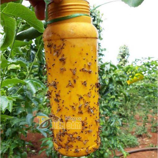 Thuốc bẫy diệt ruồi vàng đục quả, côn trùng gây hại - T72