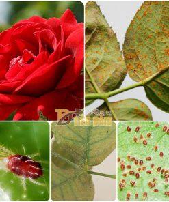 Dung dịch đặc hiệu diệt trừ nhện đỏ Ortus 5SC – T63