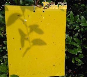 Miếng dán bẫy côn trùng gây hại 20*24cm- T34