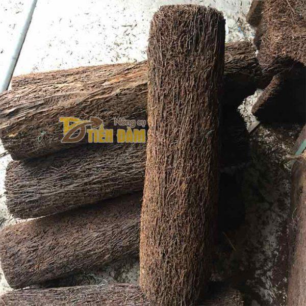 Dớn trụ trồng lan 40 x10cm - GT22