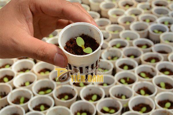 Giá thể trồng hoa và cây cảnh Mụn xơ dừa - GT15