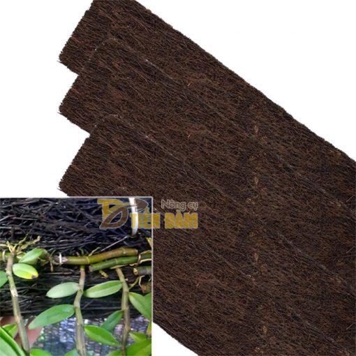 Bảng dớn trồng lan kích thước 60 x 20 x 4cm - GT20