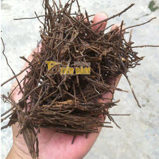 Giá thể trồng lan Dớn Cọng - GT23