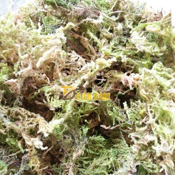 Rêu rừng trồng lan gói 200g - GT31
