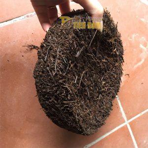 Đĩa dớn trồng lan kích thước 20x20x5cm – GT21