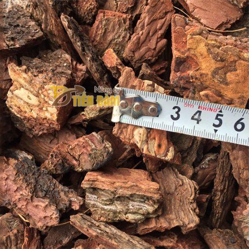 Vỏ thông trồng lan Thanh Hà kích thước 3x4cm - GT3
