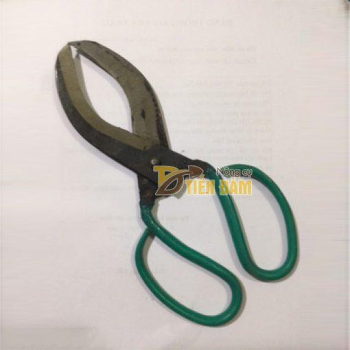 Kéo khoanh vỏ , điều tiết sinh trưởng cho cây lưỡi mịn - D16