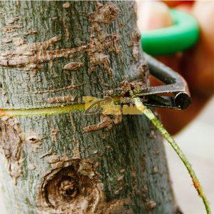 Dụng cụ khoanh tiện vỏ cây lưỡi inox – D1