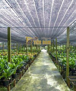 Lưới che nắng Thái Lan khổ 4x5m – D58