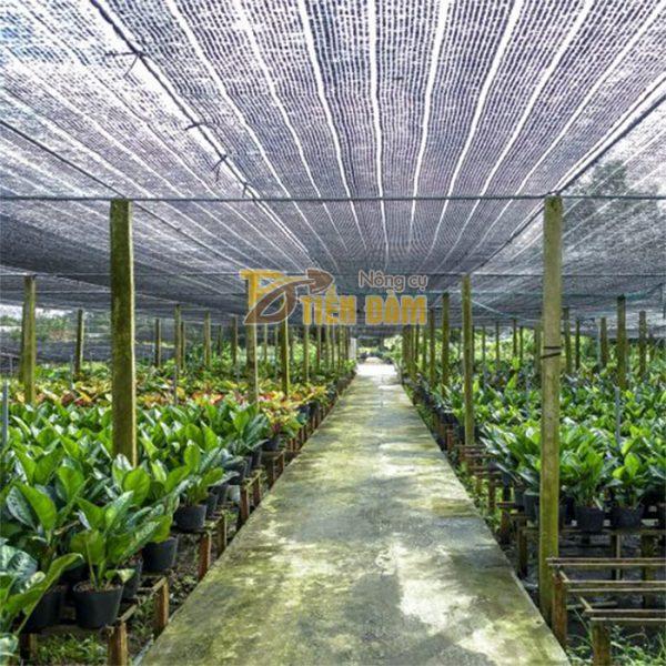 Lưới che nắng Thái Lan khổ 4x5m - D58