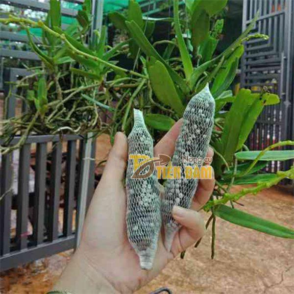 Phân dê cho lan đựng sẵn trong túi lưới 10cm - GT7
