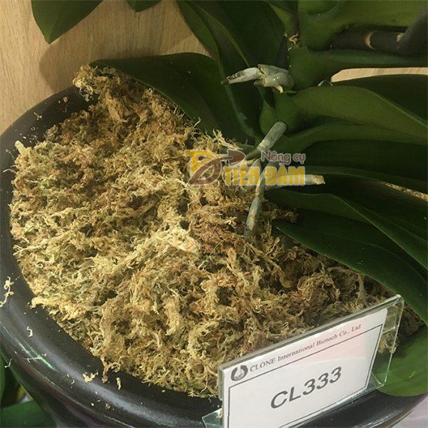 Rêu Chile trồng lan nhập khẩu Đài Loan - GT29