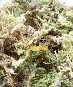 Rêu Chile trồng lan nhập khẩu Đài Loan – GT29