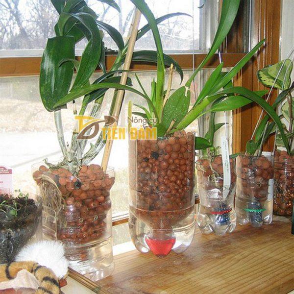 Viên đất nung sỏi nhẹ trồng lan, cây cảnh Thanh Hà - GT17