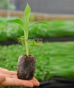 20 viên nén xơ dừa ươm hạt – XD2