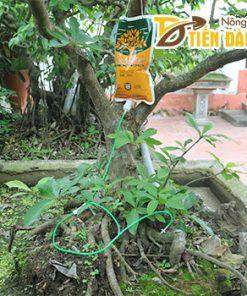 Túi truyền dịch cho cây trồng – T140
