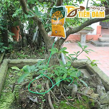 Túi truyền dịch cho cây trồng - T140
