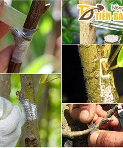 Băng ghép cây tự hủy khổ 5cm – G3B
