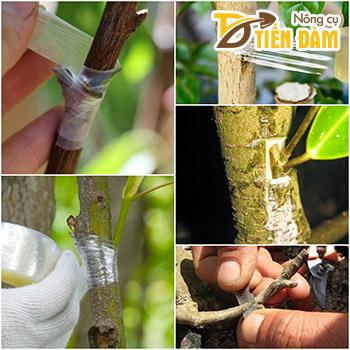 Băng ghép cây tự hủy khổ 5cm - G3B