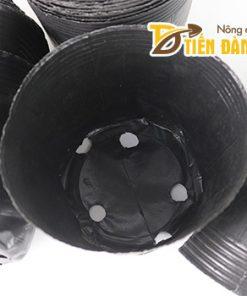 1kg Chậu ươm cây nhựa dẻo 15×13 – CH5