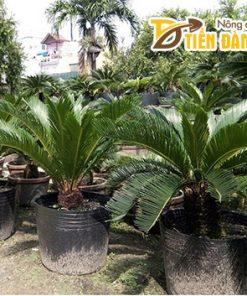 1Kg Chậu ươm cây giống màu đen 36×30 – CH8