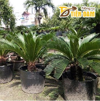 1Kg Chậu ươm cây giống màu đen 36x30 - CH8