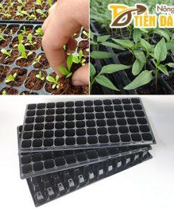 5 Khay ươm hạt giống 72 lỗ – CH9