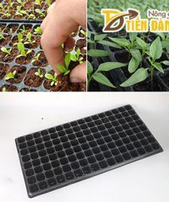 5 Khay ươm hạt giống 128 lỗ – CH10