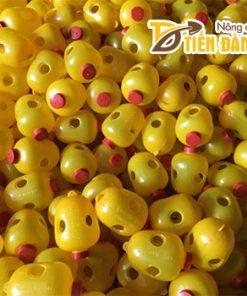 Lồng nhựa bẫy ruồi vàng – D86