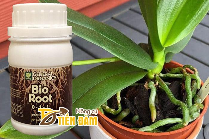 Thuốc kích rễ của Mỹ Bio Root