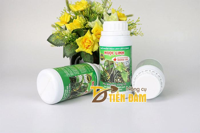Thuốc trị thối nhũn cho hoa lan hiệu quả ngay sau 12 giờ