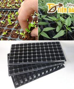 5 Khay ươm hạt giống nhựa đen 50 lỗ – CH12