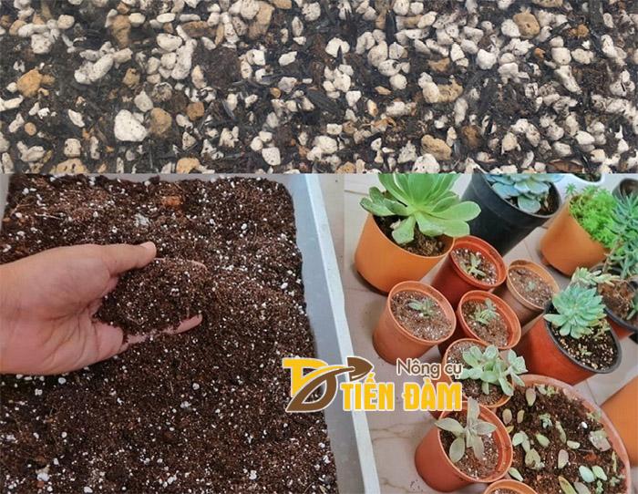 Đá Perlite Namix được trộn với đất để trồng sen đá, xương rồng