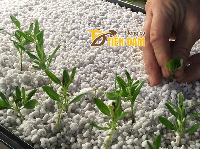 Đá trân trâu được dùng nhiều trong các vườn ươm